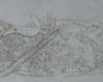 Mujer Blanca y Pájaros Tierra